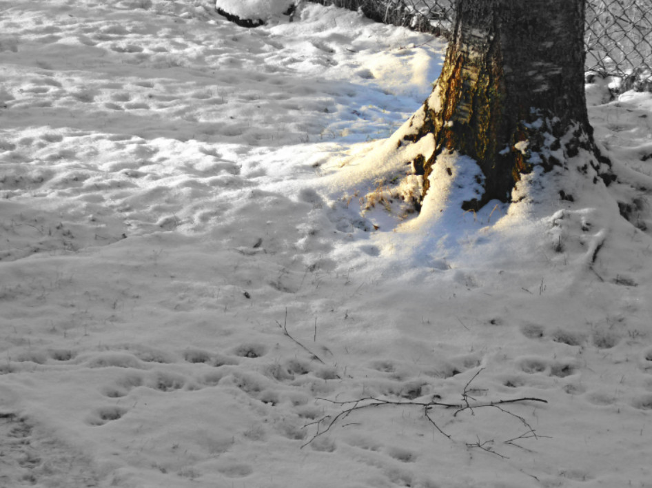 vinterparot